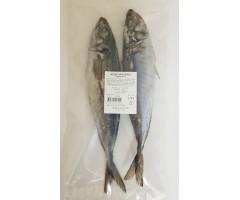 Horse Mackerel Taggmakrill 2-Pack