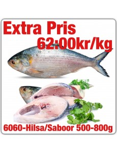 6060-Indisk Staksill (Hilsa/Saboor)500-800g 20kg Fryst