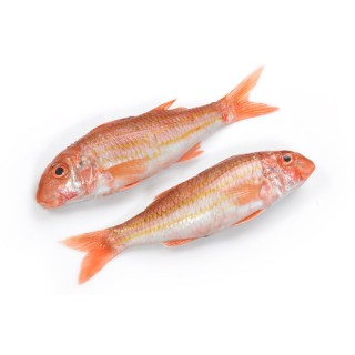 Red Mullet (sultan Ibrahim) IQ 80g+ 8x1kg (Fryst)